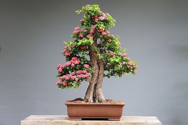 bonsai jak zacząć
